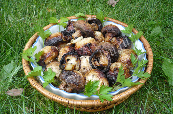 Пожарить грибы на костре